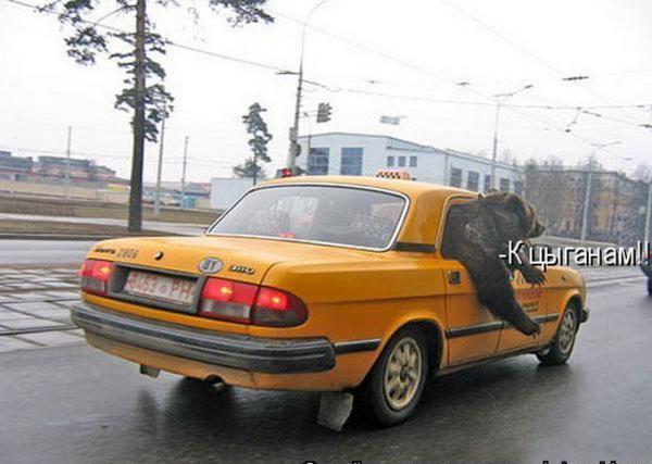 http://www.anekdotov-mnogo.ru/image-prikol/smeshnie_kartinki_1357473766060120131615.jpg