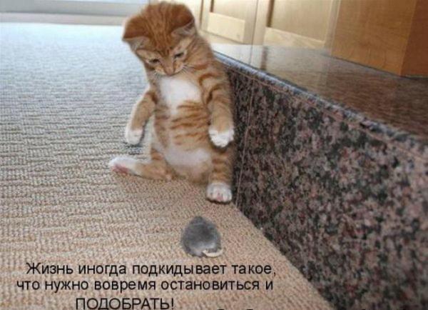 http://www.anekdotov-mnogo.ru/image-prikol/smeshnie_kartinki_1357473766060120132579.jpg