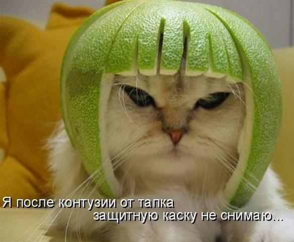 http://www.anekdotov-mnogo.ru/image-prikol/smeshnie_kartinki_1357473766060120132932.jpg