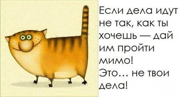 http://www.anekdotov-mnogo.ru/image-prikol/smeshnie_kartinki_135776622010012013454.jpg