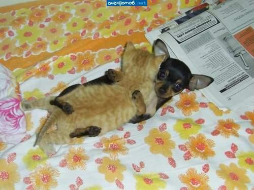 http://www.anekdotov-mnogo.ru/image-prikol/smeshnie_kartinki_1358357193160120131109.jpg