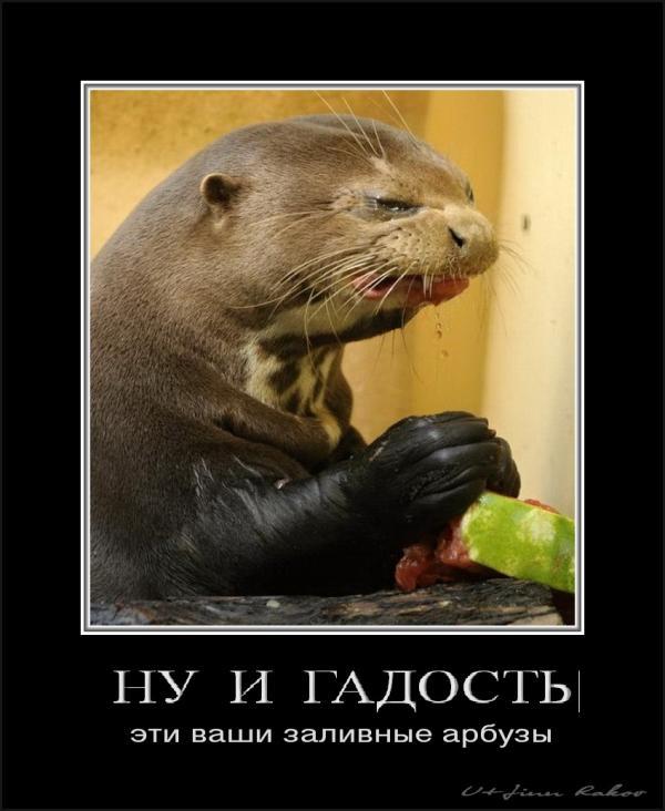http://www.anekdotov-mnogo.ru/image-prikol/smeshnie_kartinki_1358439837170120131782.jpg