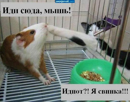 http://www.anekdotov-mnogo.ru/image-prikol/smeshnie_kartinki_1358578065190120132920.jpg