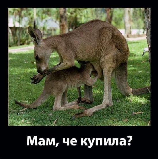 http://www.anekdotov-mnogo.ru/image-prikol/smeshnie_kartinki_1359041210240120132898.jpg