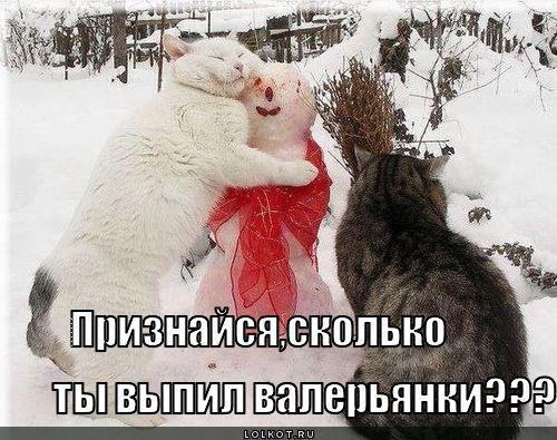 http://www.anekdotov-mnogo.ru/image-prikol/smeshnie_kartinki_135925916727012013861.jpg
