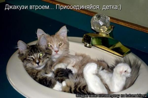 http://www.anekdotov-mnogo.ru/image-prikol/smeshnie_kartinki_1359259756270120131379.jpg