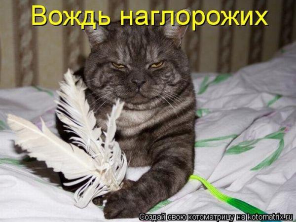 http://www.anekdotov-mnogo.ru/image-prikol/smeshnie_kartinki_1359262332270120132988.jpg