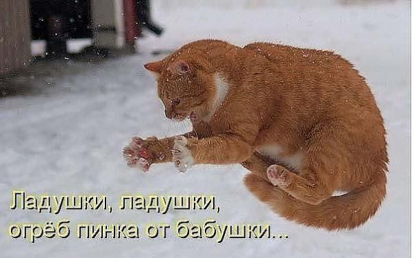 http://www.anekdotov-mnogo.ru/image-prikol/smeshnie_kartinki_1359292825270120131286.jpg
