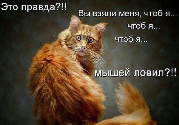 http://www.anekdotov-mnogo.ru/image-prikol/smeshnie_kartinki_135930491027012013839.jpg