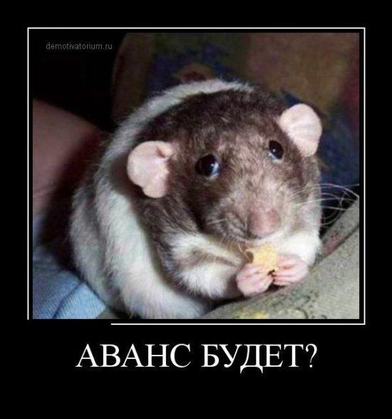 http://www.anekdotov-mnogo.ru/image-prikol/smeshnie_kartinki_136005863605022013344.jpg