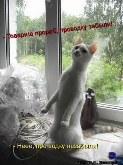 http://www.anekdotov-mnogo.ru/image-prikol/smeshnie_kartinki_136008960005022013289.jpg