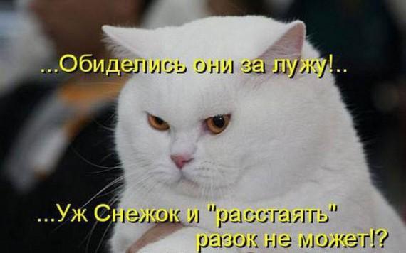 http://www.anekdotov-mnogo.ru/image-prikol/smeshnie_kartinki_136008960005022013319.jpg