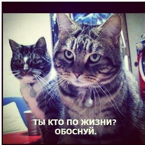 http://www.anekdotov-mnogo.ru/image-prikol/smeshnie_kartinki_136012449706022013927.jpg