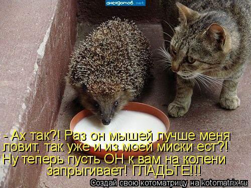 http://www.anekdotov-mnogo.ru/image-prikol/smeshnie_kartinki_1360333965080220132027.jpg