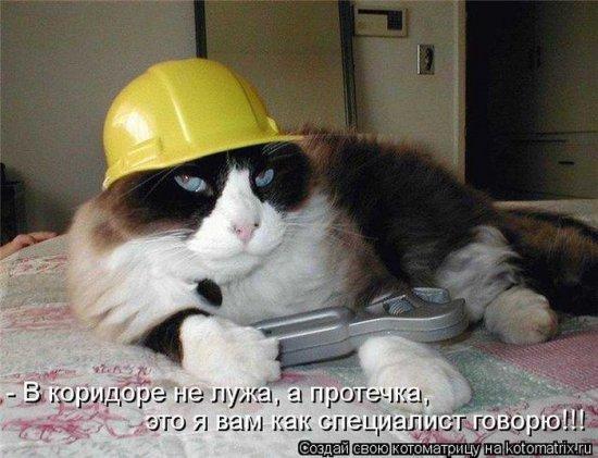http://www.anekdotov-mnogo.ru/image-prikol/smeshnie_kartinki_1360526934110220132548.jpg