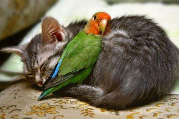 http://www.anekdotov-mnogo.ru/image-prikol/smeshnie_kartinki_1362058447280220131183.jpg