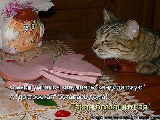 http://www.anekdotov-mnogo.ru/image-prikol/smeshnie_kartinki_136206122128022013497.jpg