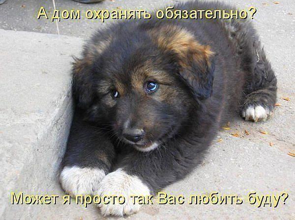 http://www.anekdotov-mnogo.ru/image-prikol/smeshnie_kartinki_136206155028022013740.jpg