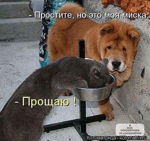 http://www.anekdotov-mnogo.ru/image-prikol/smeshnie_kartinki_1362061561280220131042.jpg