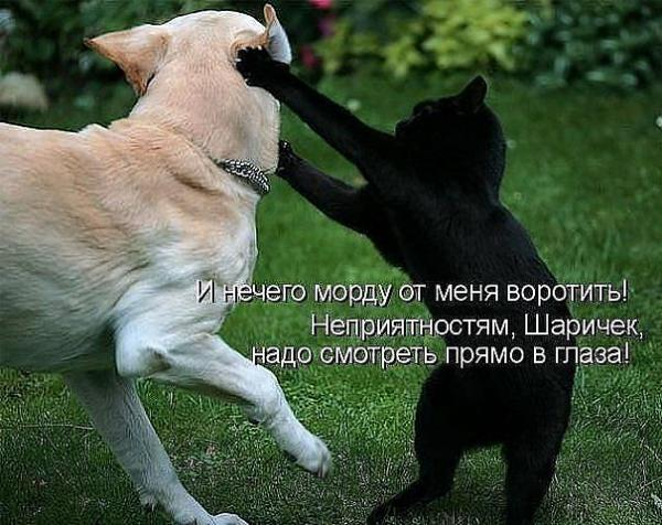 http://www.anekdotov-mnogo.ru/image-prikol/smeshnie_kartinki_136206159728022013882.jpg
