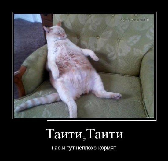 http://www.anekdotov-mnogo.ru/image-prikol/smeshnie_kartinki_136207431728022013621.jpg