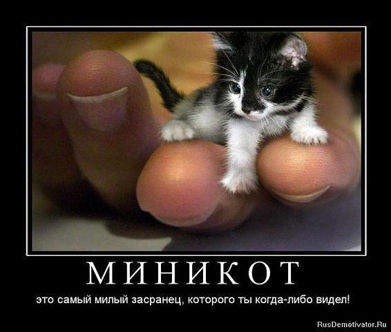 http://www.anekdotov-mnogo.ru/image-prikol/smeshnie_kartinki_1362166140010320131329.jpg