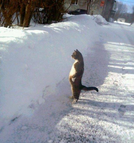 http://www.anekdotov-mnogo.ru/image-prikol/smeshnie_kartinki_1362377514040320131181.jpg