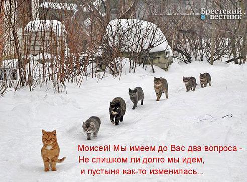 http://www.anekdotov-mnogo.ru/image-prikol/smeshnie_kartinki_1362534210060320131703.jpg