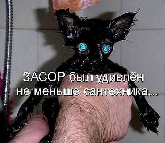 http://www.anekdotov-mnogo.ru/image-prikol/smeshnie_kartinki_1362560214060320131259.jpg