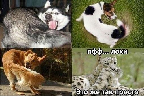 http://www.anekdotov-mnogo.ru/image-prikol/smeshnie_kartinki_1363006498110320131878.jpg