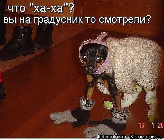 http://www.anekdotov-mnogo.ru/image-prikol/smeshnie_kartinki_1363012390110320131101.jpg