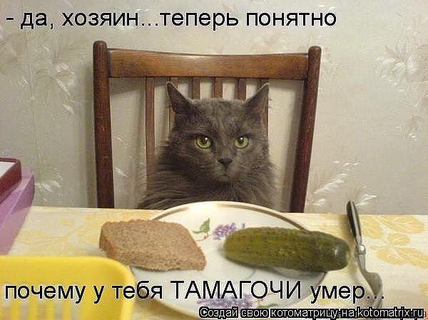 http://www.anekdotov-mnogo.ru/image-prikol/smeshnie_kartinki_1363012424110320131595.jpg