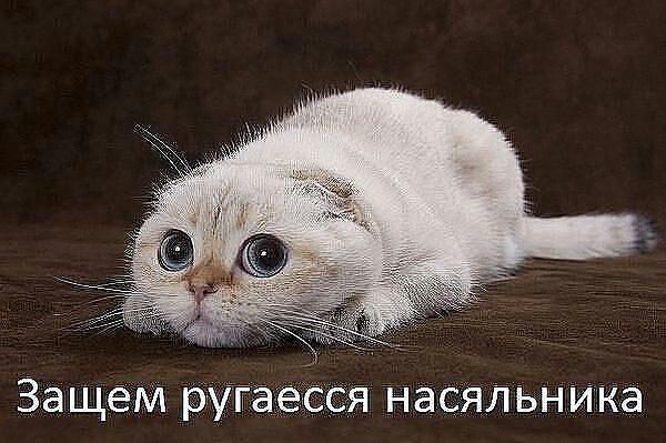 http://www.anekdotov-mnogo.ru/image-prikol/smeshnie_kartinki_136301242411032013506.jpg
