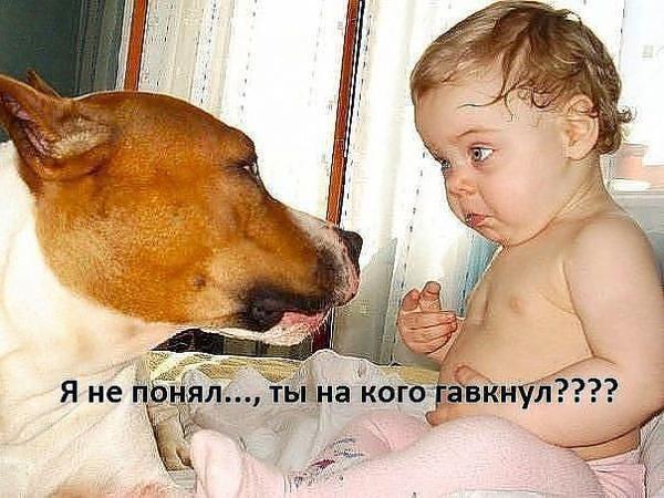 http://www.anekdotov-mnogo.ru/image-prikol/smeshnie_kartinki_1363012425110320131851.jpg