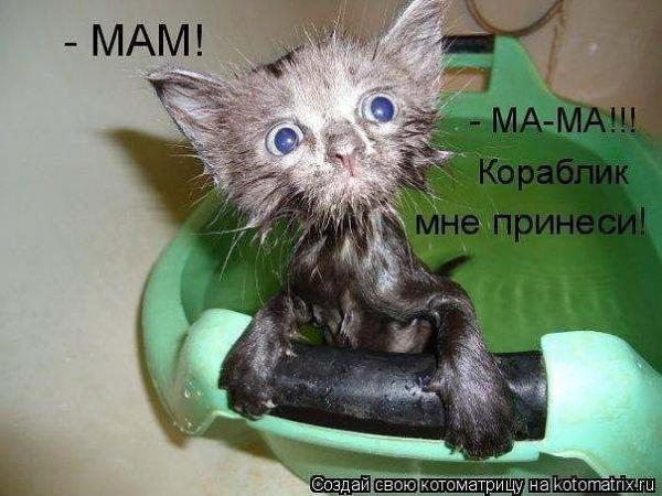 http://www.anekdotov-mnogo.ru/image-prikol/smeshnie_kartinki_1363116700120320131674.jpg