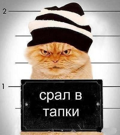 http://www.anekdotov-mnogo.ru/image-prikol/smeshnie_kartinki_1363117045120320132512.jpg