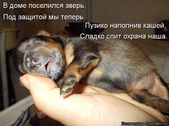 http://www.anekdotov-mnogo.ru/image-prikol/smeshnie_kartinki_136333767615032013198.jpg