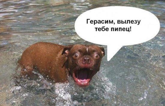 http://www.anekdotov-mnogo.ru/image-prikol/smeshnie_kartinki_1363576208180320132349.jpg