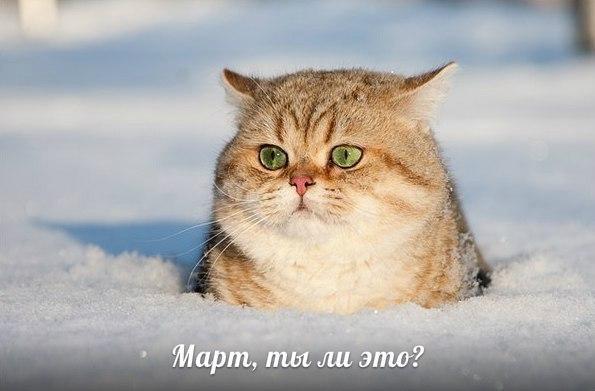 http://www.anekdotov-mnogo.ru/image-prikol/smeshnie_kartinki_1363605820180320132475.jpg