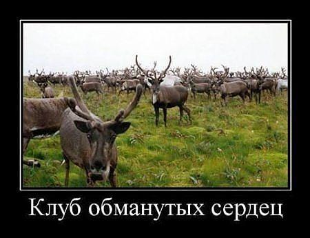 http://www.anekdotov-mnogo.ru/image-prikol/smeshnie_kartinki_1363632092180320132105.jpg