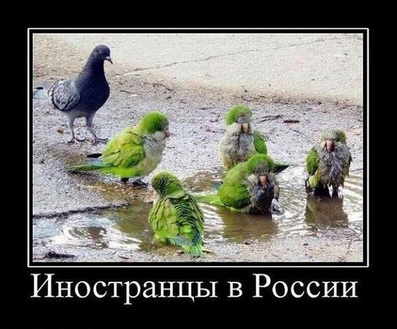 http://www.anekdotov-mnogo.ru/image-prikol/smeshnie_kartinki_136379623520032013589.jpg