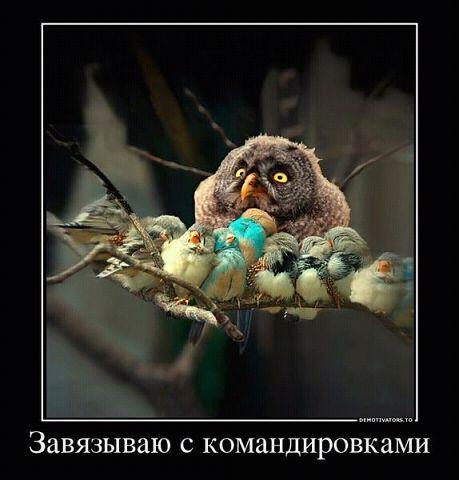 http://www.anekdotov-mnogo.ru/image-prikol/smeshnie_kartinki_136388935421032013588.jpg