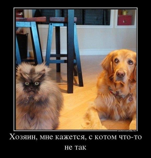 http://www.anekdotov-mnogo.ru/image-prikol/smeshnie_kartinki_1363897611220320132207.jpg
