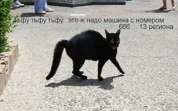 http://www.anekdotov-mnogo.ru/image-prikol/smeshnie_kartinki_136392986622032013463.jpg