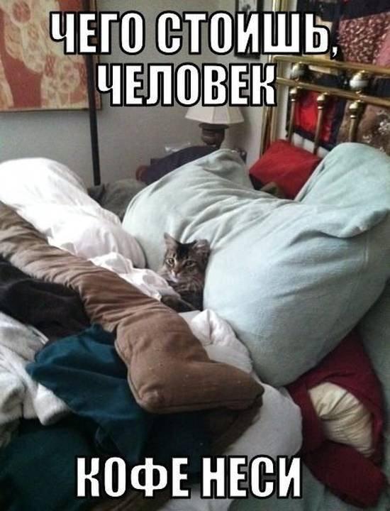 http://www.anekdotov-mnogo.ru/image-prikol/smeshnie_kartinki_1364566830290320132524.jpg