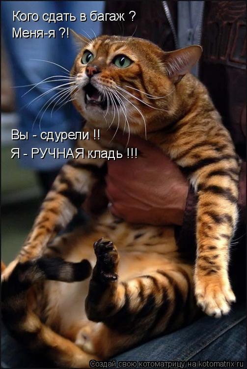 http://www.anekdotov-mnogo.ru/image-prikol/smeshnie_kartinki_136471490531032013313.jpg
