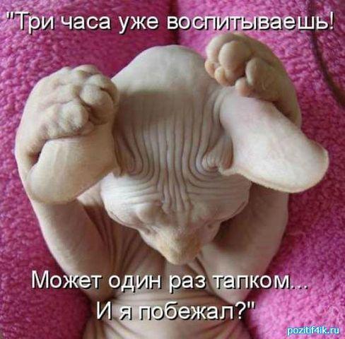 http://www.anekdotov-mnogo.ru/image-prikol/smeshnie_kartinki_1364714957310320131821.jpg