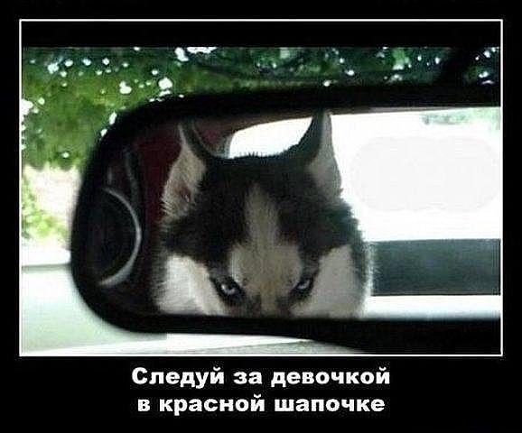 http://www.anekdotov-mnogo.ru/image-prikol/smeshnie_kartinki_1364735204310320132525.jpg