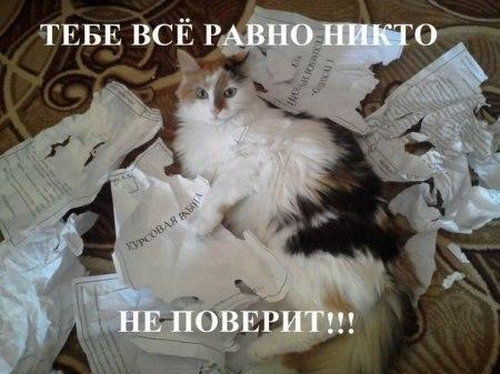 Звери в теме;) - Страница 4 Smeshnie_kartinki_1366371819190420132596