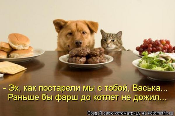 Звери в теме;) - Страница 4 Smeshnie_kartinki_136686672825042013287